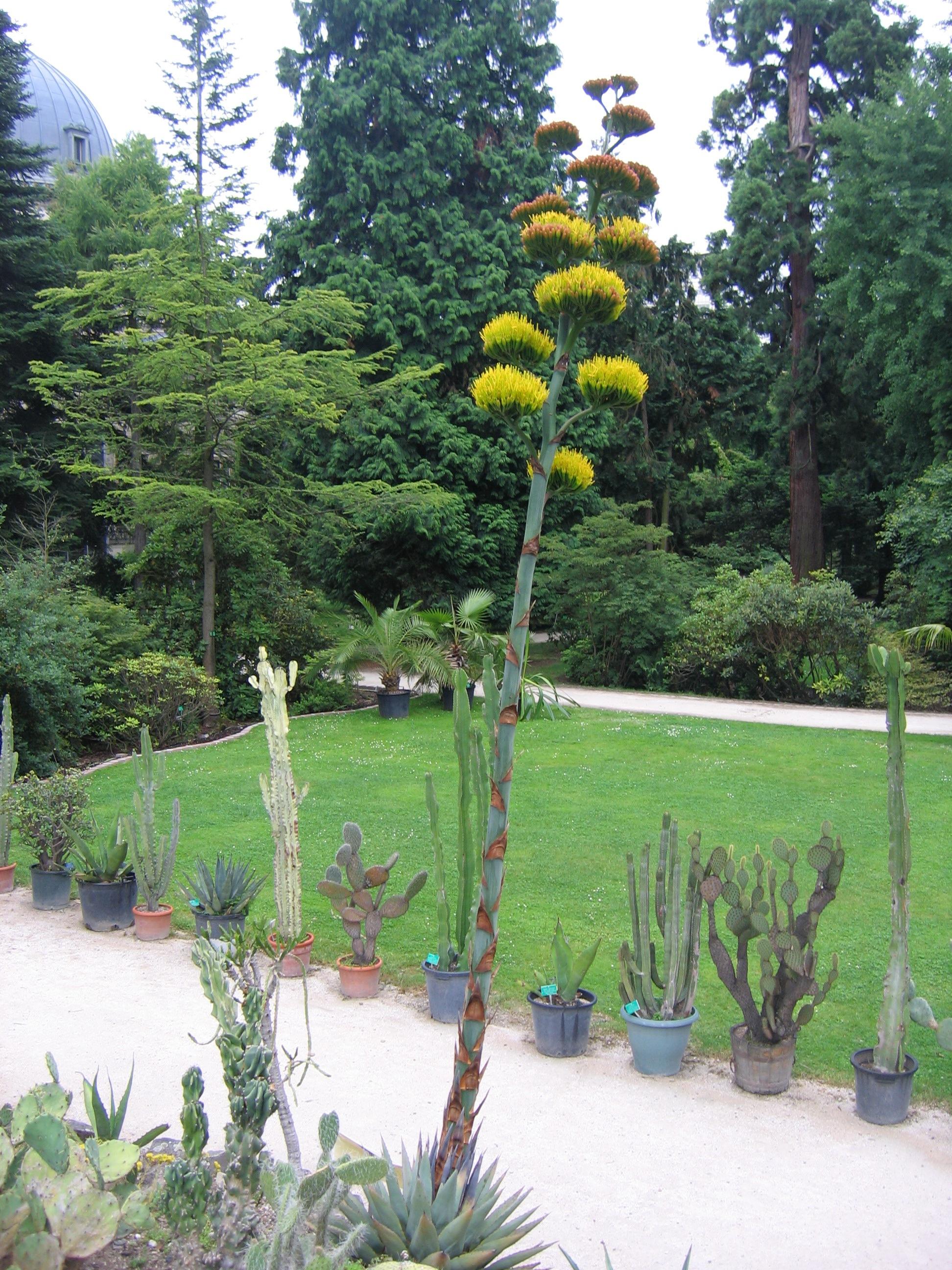 L 39 actu num ro 11 edition du 03 07 2009 culture art - Jardin botanique de l universite de strasbourg ...