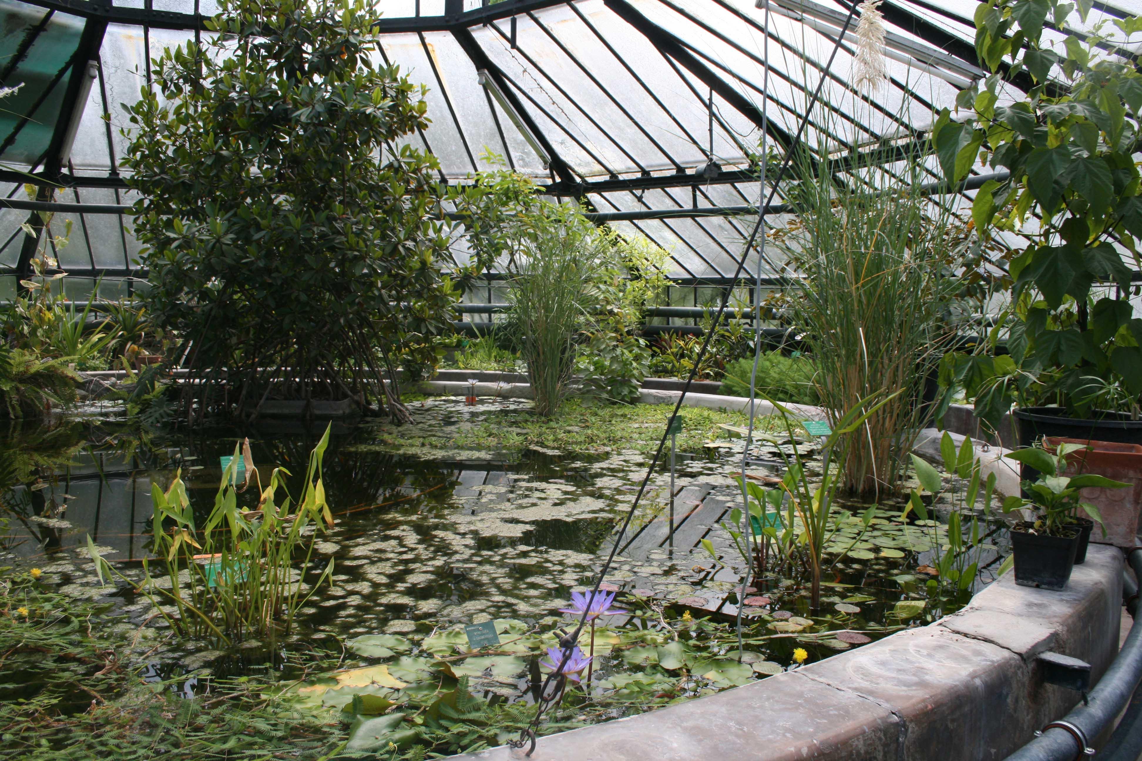 L 39 actu num ro 42 edition du 06 05 2011 universit en for Le jardin des fleurs strasbourg